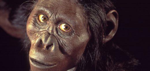 Lucy australopiteca